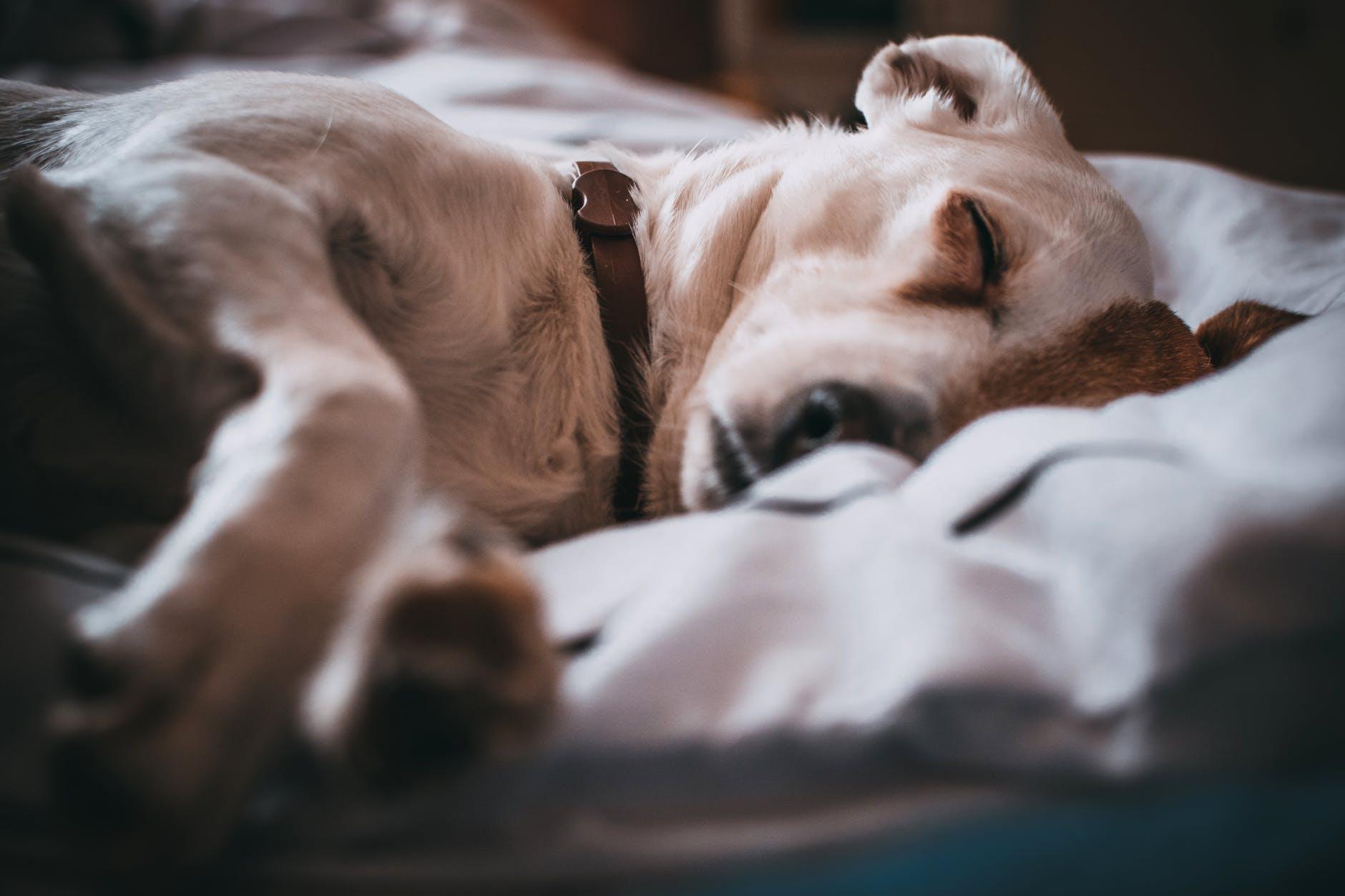 close up photography of sleeping dog