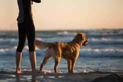 animal beach clouds dog